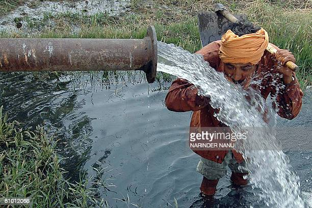 An Indian farmer drinks water from a tubewell after working in the fields on the outskirts of Amritsar on May 7 2008 Temperatures are already...