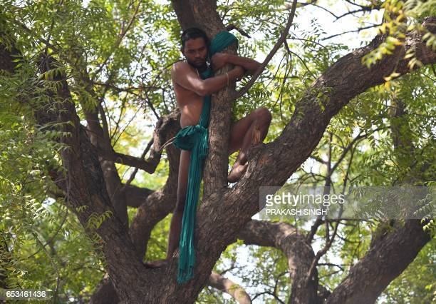 An Indian farmer from Tamil Nadu state climbs a tree in a bid to commit suicide but was later coaxed down during a protest in New Delhi on March 15...