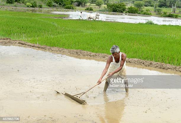 An Indian farmer levels a muddy field with a handmade wooden stick ahead of the planting of paddy at Medak district some 60 kilometers from Hyderabad...