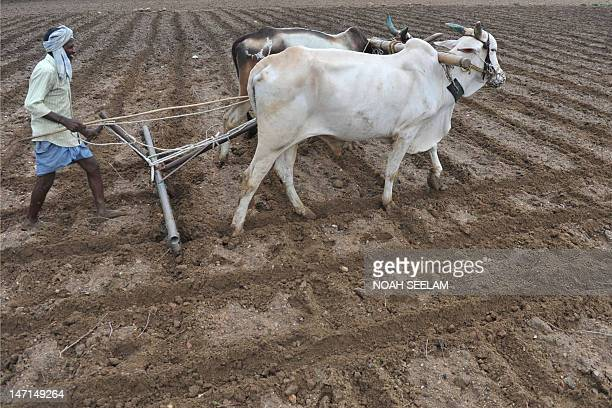 An Indian farmer ploughs an agricultural field ahead of anticipated monsoon rains in Warangal some 140 kilometers from Hyderabad on June 26 2012...
