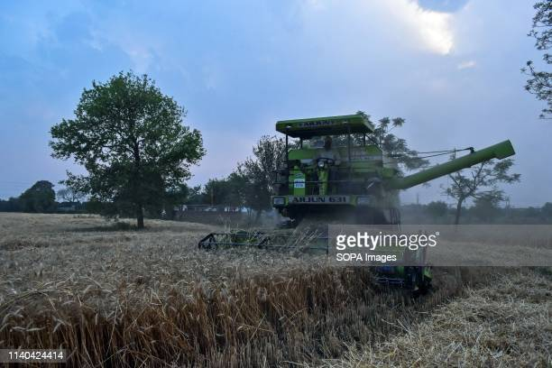 An Indian farmer seen using a combine harvester during the harvest in Punjab Harvesting of wheat has begun in India one of the world's largest...