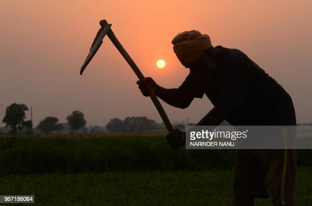 TOPSHOT An Indian farmer works in a field on the outskirts of Amritsar on May 10 2018