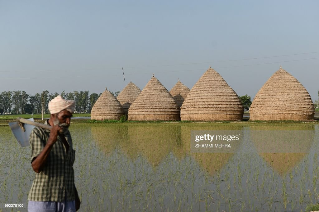 An Indian farmer works in a fields on the outskirts of Jalandhar on July 7 2018