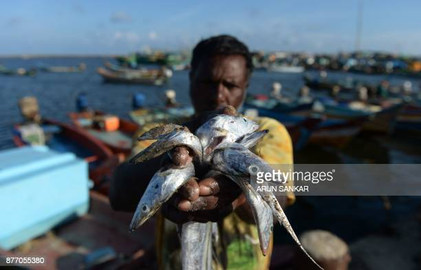 An Indian fisherman holds fish from the evening catch at a fishing harbour in Chennai on November 21 2017 World Fisheries day is observed on November...