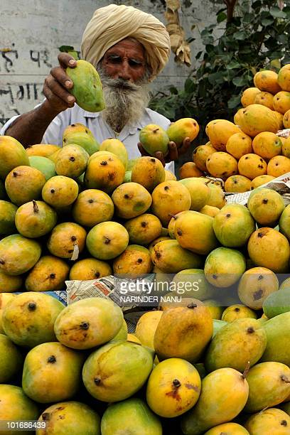 An Indian fruit vendor arranges mangoes on his cart along a road in Amritsar on June 7 2010 Although India is the largest producer of mangoes it...