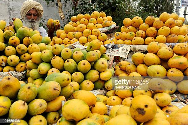 An Indian fruit vendor displays mangoes on his cart along a road in Amritsar on June 7 2010 Although India is the largest producer of mangoes it...
