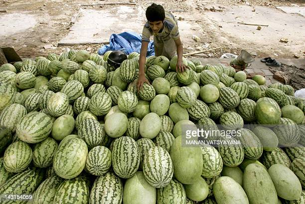 An Indian fruit vendor Salim arranges his stock of watermelons at a roadside stall while waiting for customers in New Delhi 30 May 2006 With the...