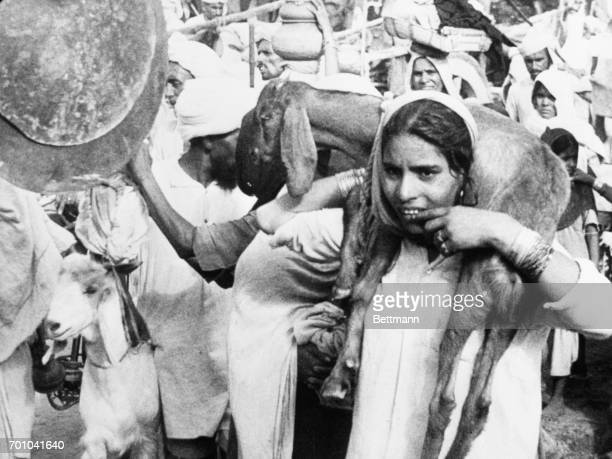 An Indian girl one of the many thousands of Muslims heading for the Indian free state of Pakistan Carries a goat as the refugees proceed on the road...