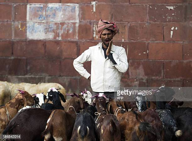 An Indian goat herder yawns as he waits for customers at an animal market in the Old Quarters of New Delhi on October 22 ahead of the Muslim feast of...