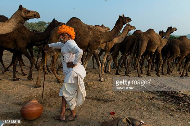 CONTENT] An Indian herder watching while his camels passing in the early morning at the camel fair grounds in Pushkar on November 11 2013 Thousands...