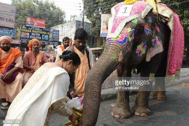 An Indian Hindu devotee offers bananas to an elephant during the annual Jagannath Rath Yatra Festival in Amritsar on November 11 2017 The three...