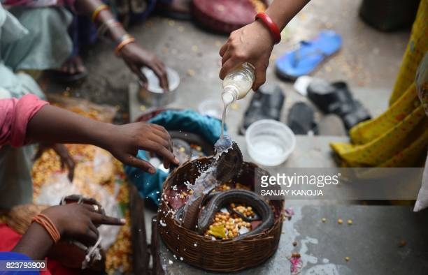 An Indian Hindu devotee pours milk on a snake as an offering during the annual Nag Panchami festival in Allahabad on July 28 2017 Officially the...