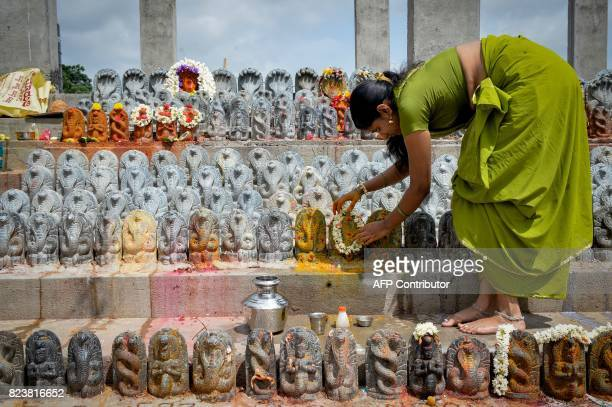 TOPSHOT An Indian Hindu devotee puts turmeric paste on stone figurines of the serpent deity Adishesha at the Mukthi Naga temple to mark the Naga...