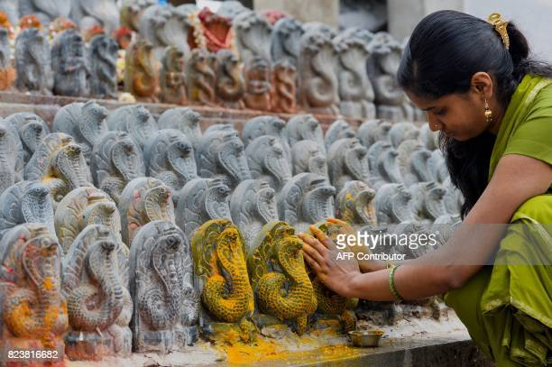 An Indian Hindu devotee puts turmeric paste on stone figurines of the serpent deity Adishesha at the Mukthi Naga temple to mark the Naga Panchami...