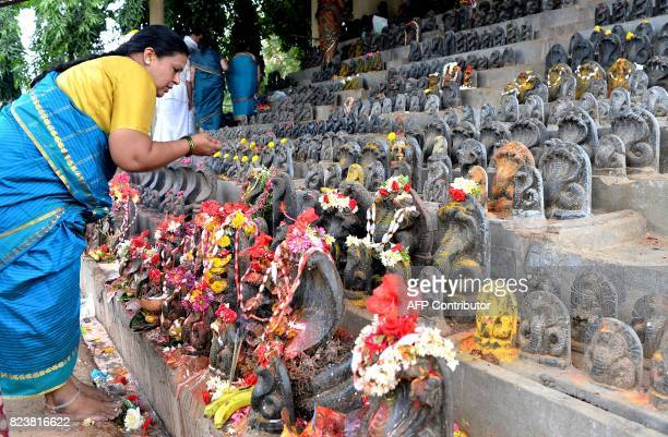 An Indian Hindu devotees makes offerings to stone figurines of the serpent deity Adishesha at the Mukthi Naga temple to mark the Naga Panchami...