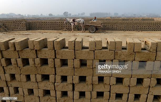 An Indian labourer loads unbaked clay bricks on a horsedrawn cart to deliver them to a brick kiln in Sahibabad on the outskirts of New Delhi on...