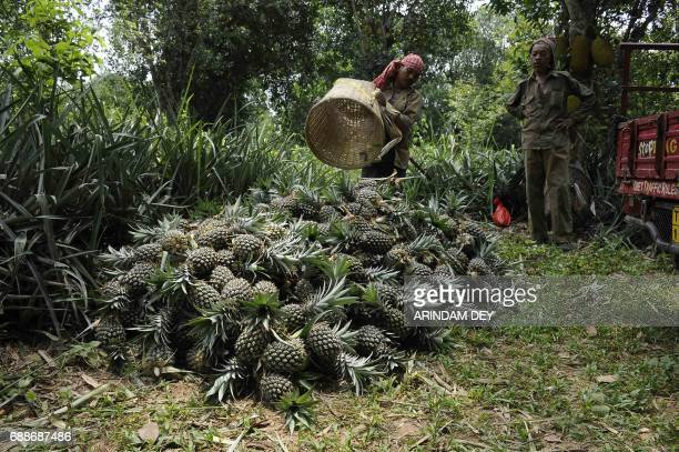 An Indian labourer unloads a basket of freshly harvested pineapples from an orchard on the outskirts of Agartala the capital of northeastern state of...