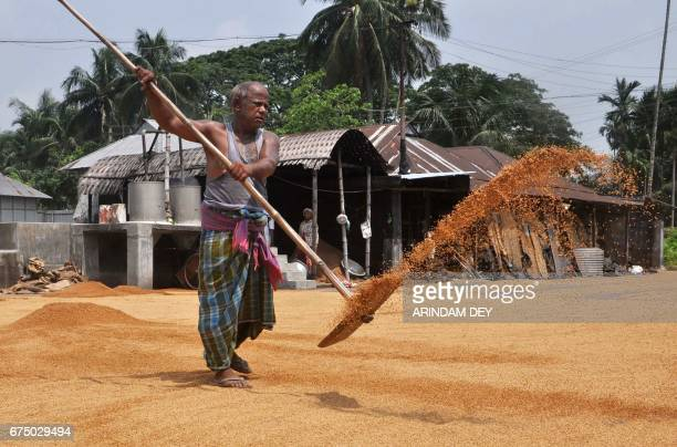An Indian labourer uses a rake as he dries paddy at a rice mill factory on the outskirts of Agartala on April 30 on the eve of International Labour...