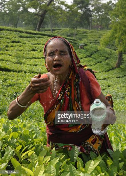 An Indian labourer washes her face as she picks tea at an estate on the outskirts of Agartala on April 30 on the eve of International Labour Day or...