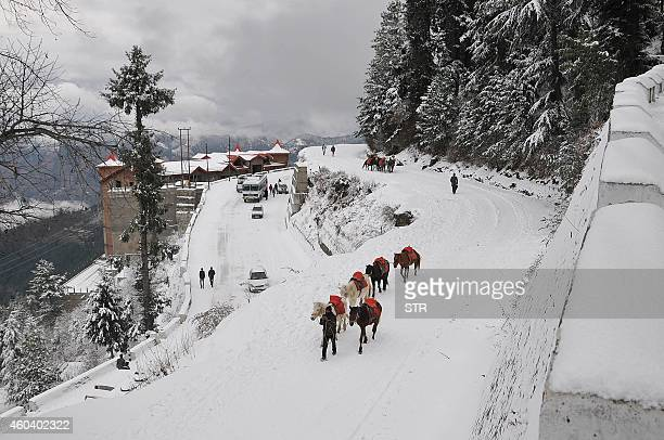 An Indian local walks with his ponies during the seasons first snowfall at Kufri some 17 kms from the northern hill town of Shimla on December 13...