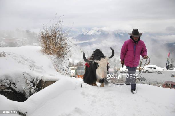 An Indian local walks with his yak on a snowcovered road during the seasons first snowfall at Kufri some 17 kms from the northern hill town of Shimla...