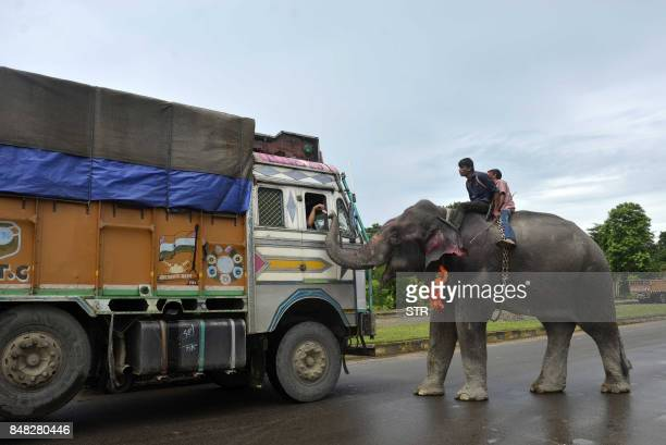 An Indian mahout rides an elephant as he collects money from a driver on the National Highway some 35kms from Dharmanagar in the northeastern state...