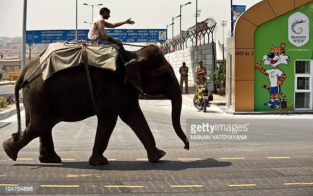 An Indian mahout rides on his elephant past the Commonwealth Games Village in New Delhi on October 1, 2010. The Queen's Baton arrived in the Indian...