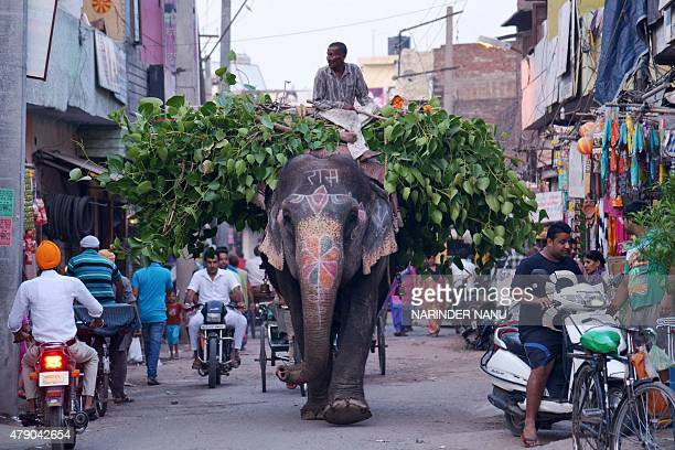 An Indian mahout uses an elephant to transport leaves along a street in Amritsar on June 30, 2015. The country is home to around 25,000 Asian...