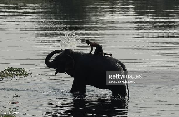An Indian mahout washes his elephant in the Yamuna River in New Delhi on April 3, 2018. / AFP PHOTO / Sajjad HUSSAIN