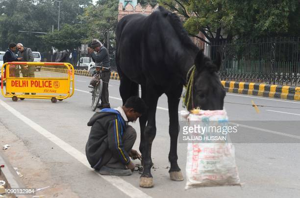 An Indian man prays as another fits a horseshoe on a horse's hoof at a roadside near Hanuman temple in New Delhi on January 27, 2019.