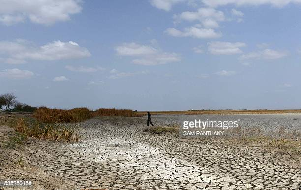 An Indian man walks on a dried out portion of wetlands at Nalsarovar Bird Sanctuary some 70kms from Ahmedabad on May 29 2016 Migratory flamingoes are...