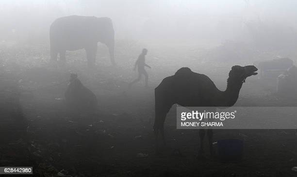 TOPSHOT An Indian man walks past a camel and an elephant tethered under a flyover on a cold foggy morning in New Delhi on December 8 2016 / AFP /...