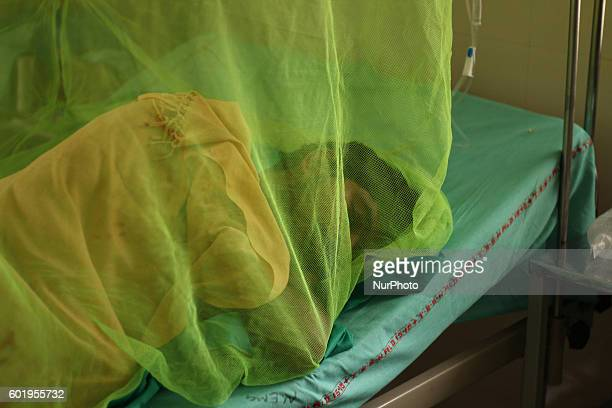 An indian patientsuffering from Dengue fever lay down in a bed under mosquito net in Dengue ward of a Government hospital in Allahabad on September...