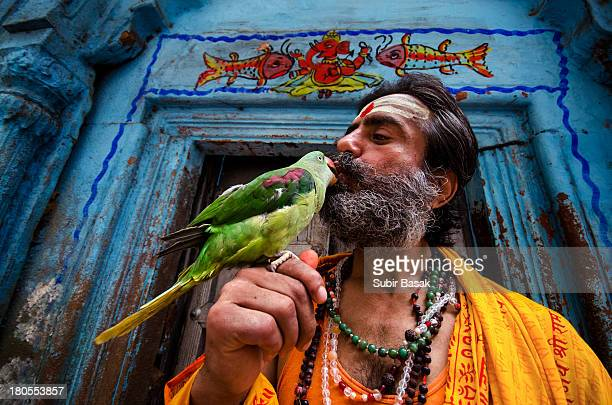An Indian sadhu kissing his pet parrot on his hand at Varanasi,Uttar Pradesh,India on September 2,2013. Varanasi, is a city on the banks of the...