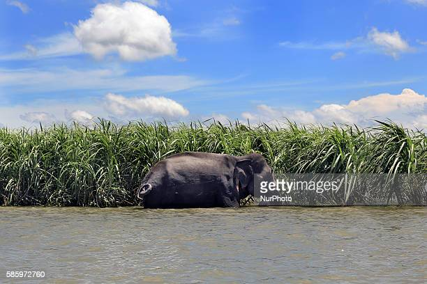 An Indian stray elephant entered into Bangladesh from Assam via flood waters through the Rowmari border on June 27 currently has been seen at Char...