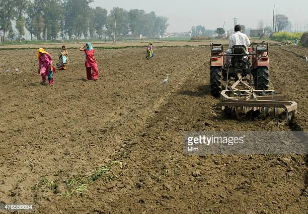 An Indian vegetable farmer tilling his farm land with help of a tractor at Bazida Zattan village on February 24 2010 in Karnal India