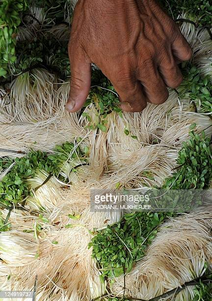 An Indian vegetable seller holds fenugreek leaves as he waits for customers outside a wholesale market in Mumbai on September 14 2011 Indian...