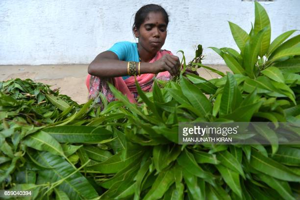 An Indian vendor sells mango and neem leaves used during events to mark the Hindu New Year at a market in Bangalore on March 28 2017 The Hindu New...