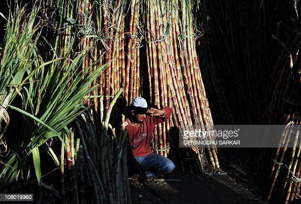 An Indian vendor waits for customers next to stacks of sugarcane generally used for the Hindu festival Makar Sankranti at a market in Bangalore on...