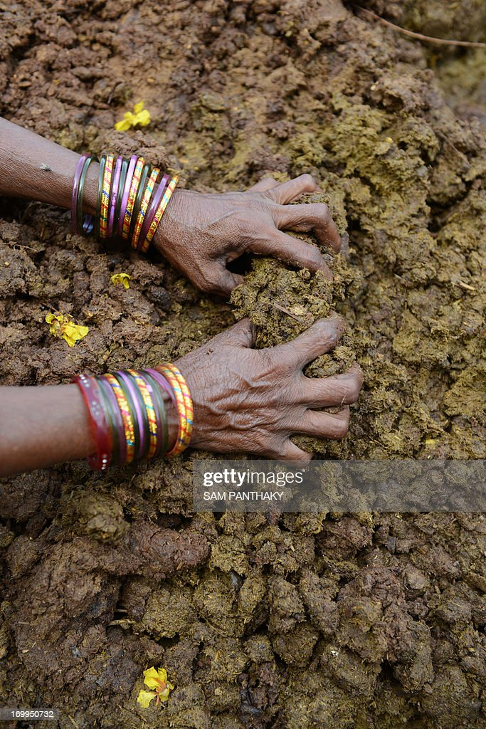 An Indian villager scow dung onto a cart at a 'gaushala' - cowpen - run by the Shree Vardhman Jivdaya Kendra charitable trust at village Luni of Mundra Taluka, some 415 kms from Ahmedabad on June 5, 2013, the World Environment Day. Housing some 1,000 cows, the centre prepares various medicines from cow urine and converts cow dung into biogas which is utilised at the centre. AFP PHOTO / Sam PANTHAKY