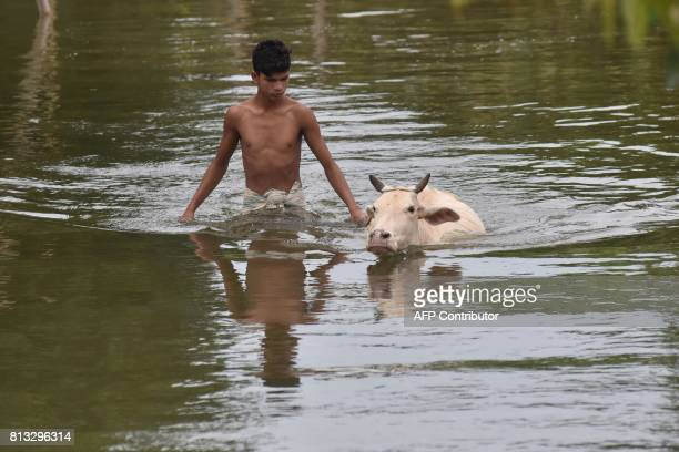 An Indian villager walks cattle through floodwater at Buraburi village in Morigaon district in the northeastern state of Assam on July 12 2017 Floods...