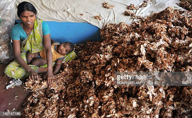 An Indian woman sorts through tamarind at a wholesale market yard in Hyderabad on February 29 2012 The red chilli market is currently suffering...