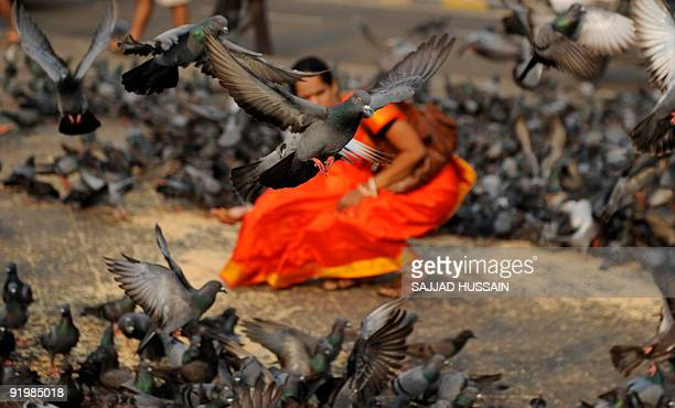 An Indian women feeds the piegons in front of The Gateway of India in Mumbai on October 15 2009 Mumbai the financial capital of India is also a hub...