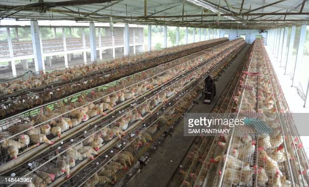 Murgi Farm