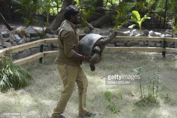 An Indian zookeeper lifts an Aldabra giant tortoise released in to the exhibit of an enclosure at the Nehru Zoological Park in Hyderabad on July 31,...