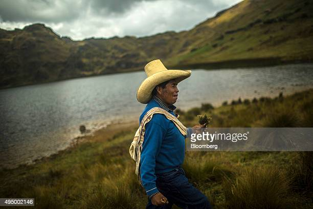 An indigenous farmer walks with a freshly picked Maqui herb which he says provides relief for stomach aches near the El Perol lagoon in Conga Peru on...