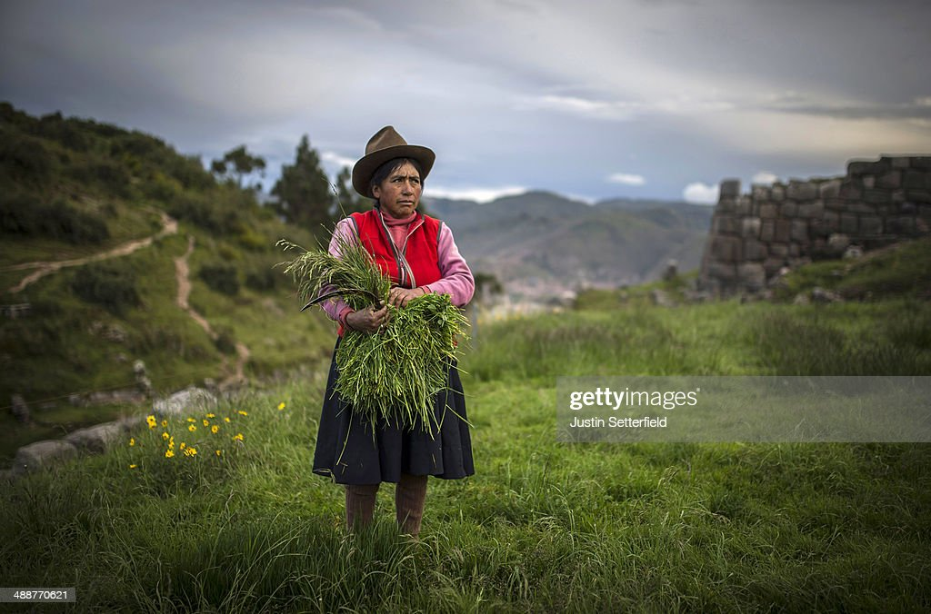An indigenous Peruvian woman cuts crops above the Incan city of Cusco from Sacsayhuaman, on January 13, 2014 in Cusco, Peru. The historic town of Cusco lies high in the Andes and is the typical rest-stop for tourists bound for Machu Picchu.