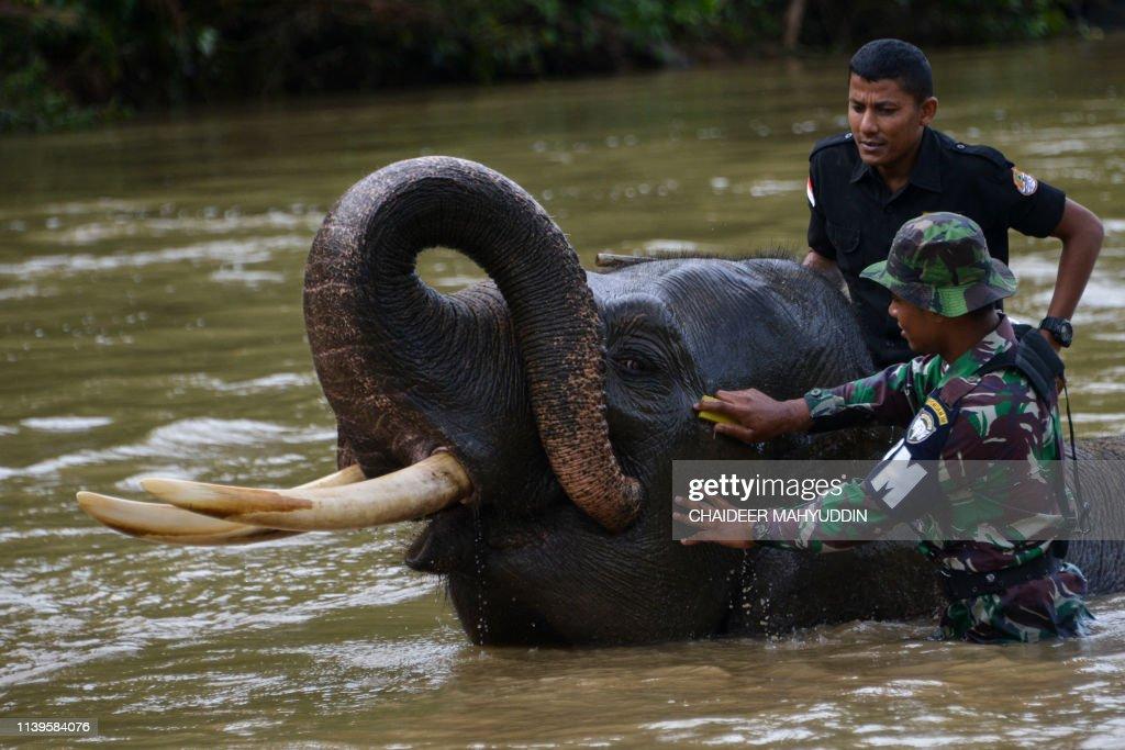 TOPSHOT-INDONESIA-CONSERVATION-ANIMAL : News Photo