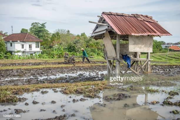 An Indonesian farmer plows a rice paddy field near North Kuta Bali Indonesia on November 9 2018