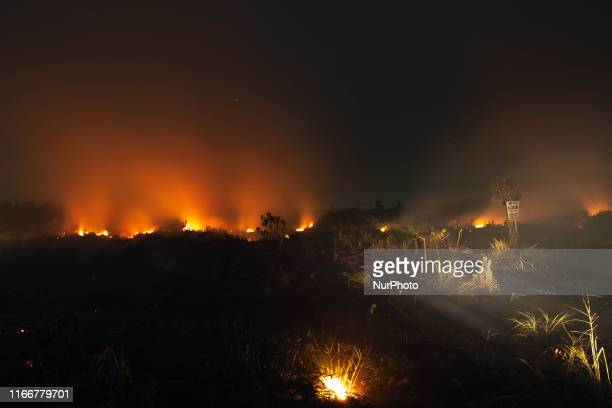 An Indonesian firefighter tries to extinguish peatland fire at Tanah Merah Village Kampar District Riau Province Indonesia September 8 2019 An...